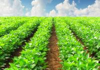 Crops on farm
